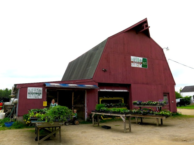 Goranson's farm Maine Erica Berman